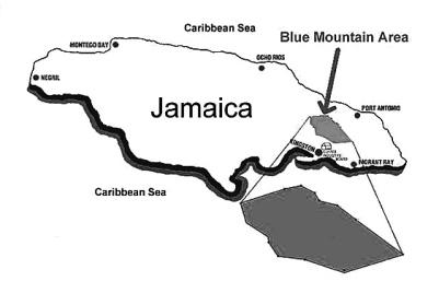 jamaica-coffee-blue-mountain