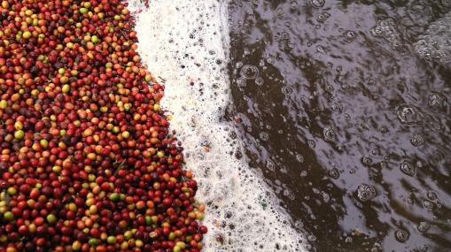 coffee-2732895_1920